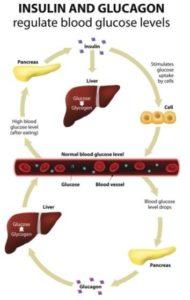 sucre et déséquilibre hormonal